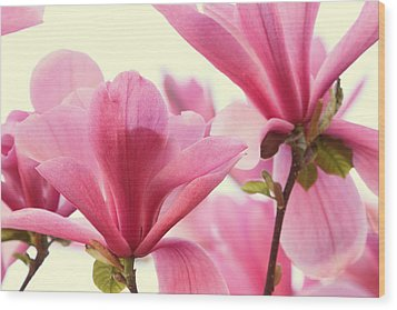 Pink Magnolias Wood Print by Peggy Collins