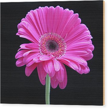 Wood Print featuring the photograph Pink On Black by Patricia Januszkiewicz