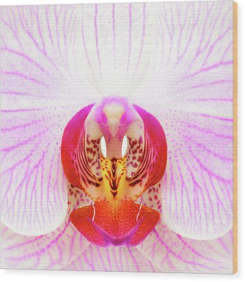Pink Orchid Wood Print by Dave Bowman