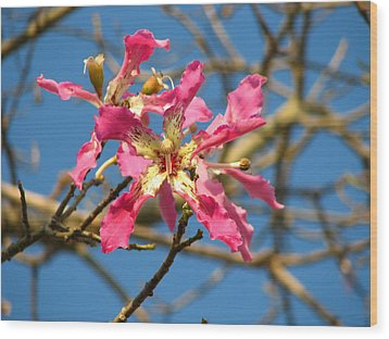 Wood Print featuring the photograph Pink Orchid Tree by Carla Parris