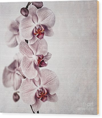 Pink Orchid Vintage Wood Print by Jane Rix