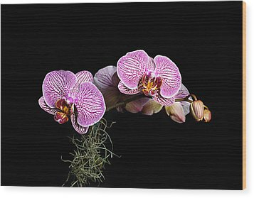 Pink Orchids Wood Print by Gary Dean Mercer Clark