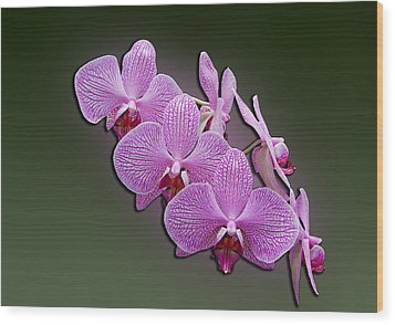Wood Print featuring the photograph Pink Orchids by John Haldane