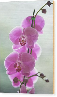 Pink Orchids Wood Print by Kicka Witte - Printscapes