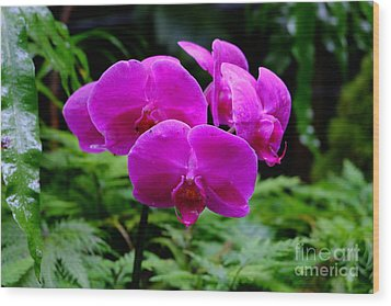 Pink Orchids Wood Print by Mini Arora