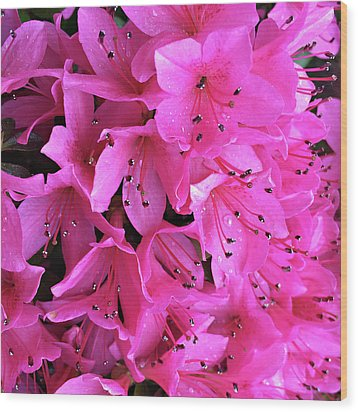 Wood Print featuring the photograph Pink Passion In The Rain by Sherry Hallemeier