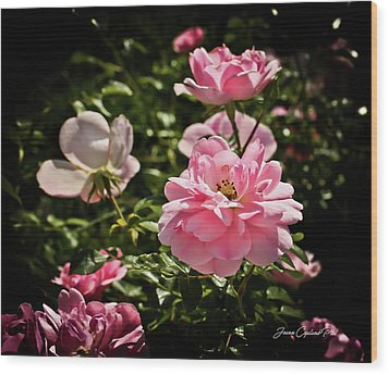 Wood Print featuring the photograph Pink Passion  by Joann Copeland-Paul