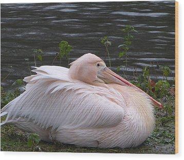 Pink Pelican Wood Print by Margaret Brooks