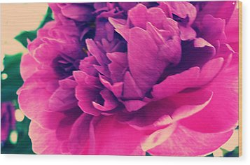 Pink Peonie Wood Print by Paul Cutright