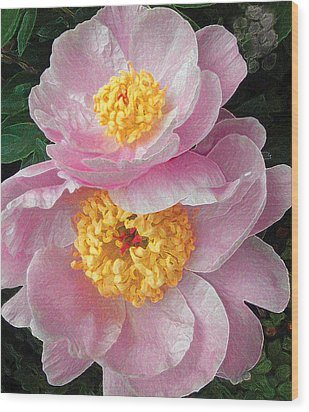 Pink Peonies Wood Print by David Klaboe