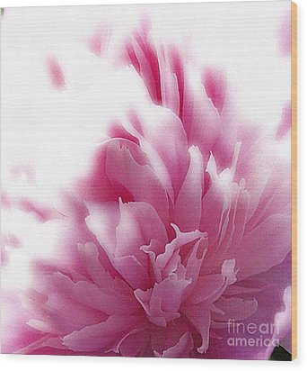Pink Peony Wood Print by Addie Hocynec