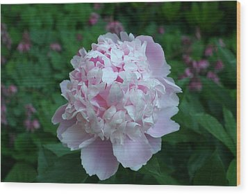 Wood Print featuring the digital art Pink Peony by Barbara S Nickerson