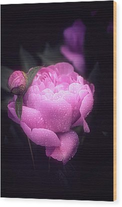 Pink Peony Wood Print by Philippe Sainte-Laudy
