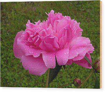 Pink Peony Wood Print by Raju Alagawadi