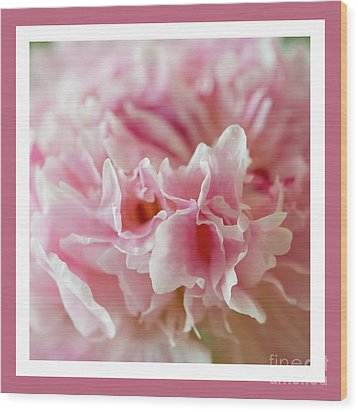 Wood Print featuring the photograph Pink Perfection by Wendy Wilton