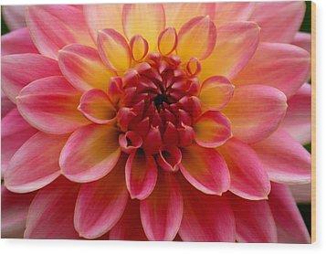 Pink Petals Wood Print by Sonja Anderson