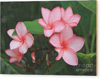 Wood Print featuring the photograph Pink Plumerias by Edward R Wisell