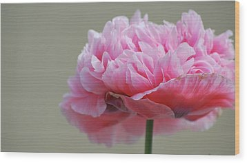 Wood Print featuring the photograph Pink Poppy by Amee Cave