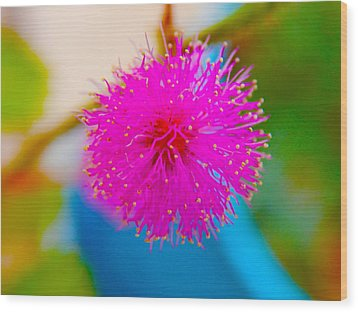 Pink Puff Flower Wood Print