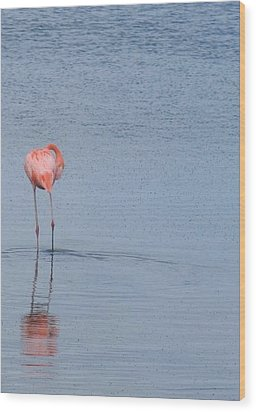 Pink Reflections Wood Print by Arry Murphey
