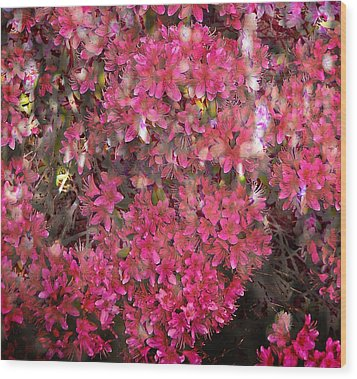 Pink Rhododendron Wood Print by Thom Zehrfeld