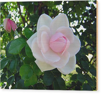 Pink Rose 2 Wood Print by George Jones