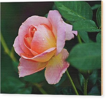 Pink Rose Wood Print by Bill Barber