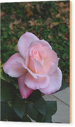 Pink Rose Wood Print by Carla Parris