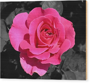 Perfect Pink Rose Wood Print by Michael Bessler