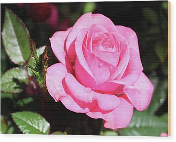 Pink Rose Wood Print by Ronda Ryan