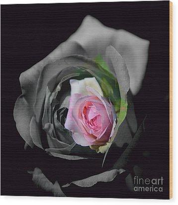 Pink Rose Shades Of Grey Wood Print