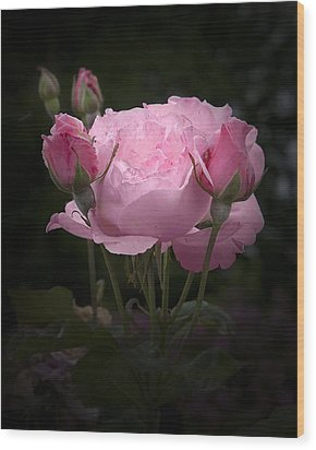 Pink Rose With Buds Wood Print