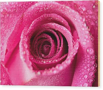 Pink Rose With Droplets Wood Print