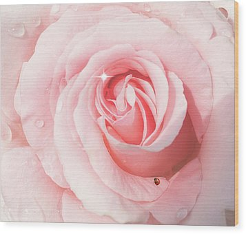 Pink Rose With Rain Drops Wood Print