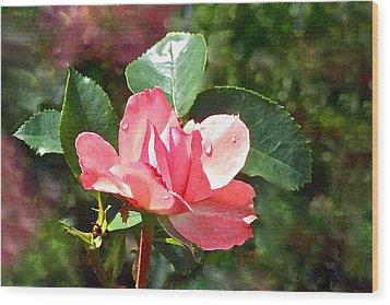Pink Roses In The Rain 2 Wood Print