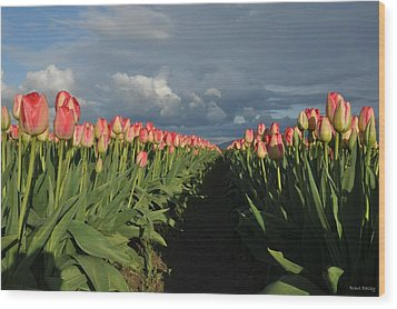 Pink Row Tulips Wood Print by Brent Easley