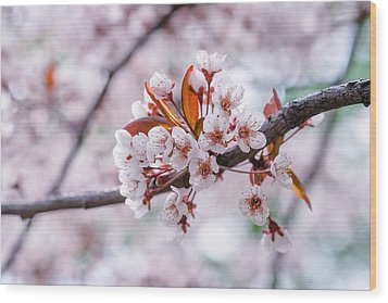 Wood Print featuring the photograph Pink Sakura Cherry Blossom by Alexander Senin