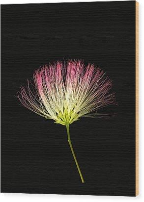 Pink Silk Wood Print by Deborah J Humphries
