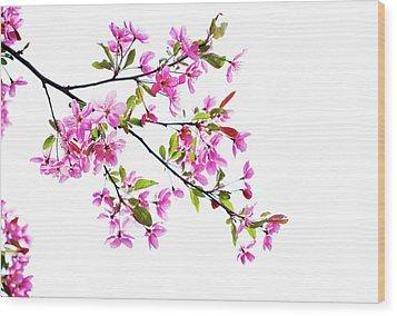 Pink Spring Wood Print by Marilyn Hunt