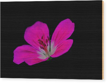 Pink Stamen Wood Print