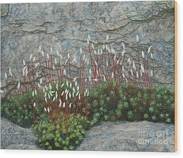 Wood Print featuring the painting Pink Stony Creek Granite Still Life Study by Cindy Lee Longhini