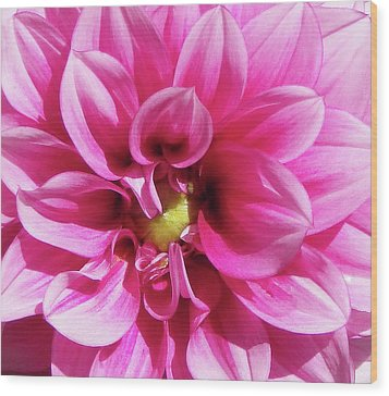 Pink Summer Flower Macro Wood Print