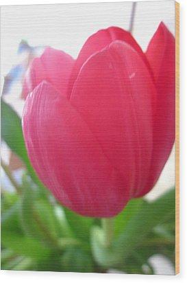 Pink Tulip Wood Print