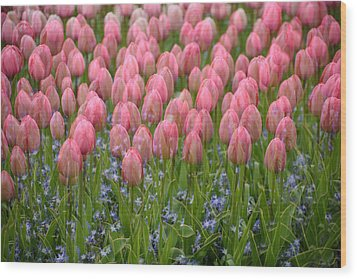 Wood Print featuring the photograph Pink Tulips by Phyllis Peterson