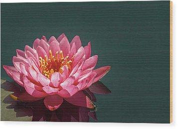 Pink Water Lily  Wood Print by Christina Lihani