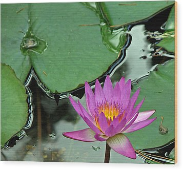 Wood Print featuring the photograph Pink Water Lily by Judy Vincent