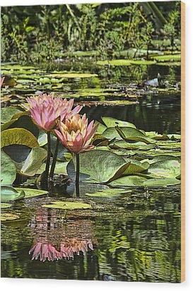 Wood Print featuring the photograph Pink Water Lily Reflections by Bill Barber