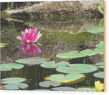 Pink Waterlilly  Wood Print by Laurianna Taylor