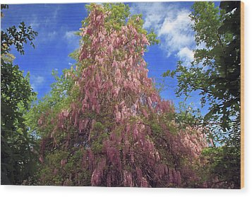 Wood Print featuring the photograph Pink Wisteria by Donna Kennedy