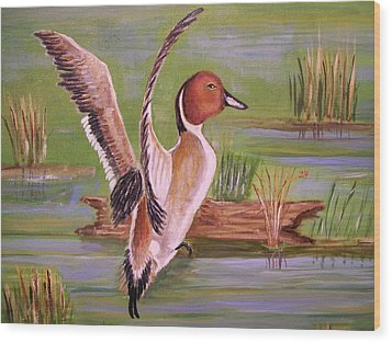 Pintail Duck II Wood Print by Belinda Lawson